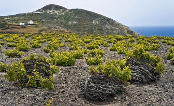 vino Assyrtiko di Santorini